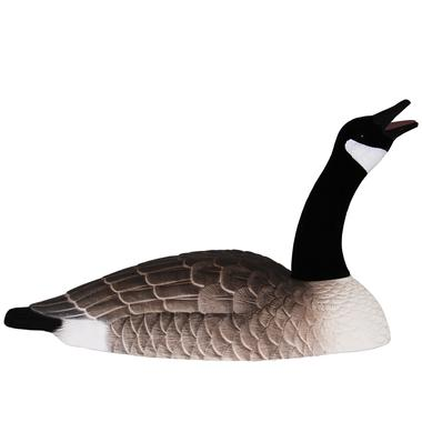 Canada Goose Shells: Touch Down 12 Pack