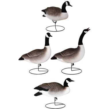 Full Body Canada Geese: Active 4 Pack
